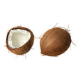 whole and half broken coco nut vector image