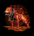 dog fire pitbull from hell artwork vector image