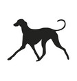 dog runs silhouette vector image