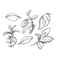 Mint medicine herb peppermint leaves hand drawn vector image vector image