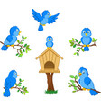 set cartoon blue bird on white background vector image vector image