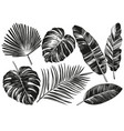 tropical leaves jungle botanical floral elements vector image