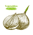 Whole Bulb Onion and Slice Hand Draw Sketch vector image vector image