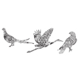 set of birds in the patterns vector image vector image