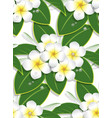 yellow plumeria flower pattern seamless on white vector image vector image