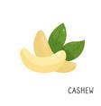 cartoon flat cashew isolated on white background vector image