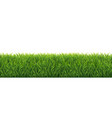 green grass border white background vector image vector image