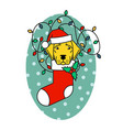 labrador retriever in christmas hat in sock vector image vector image