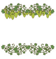 ornamental grapes and grape leaves vector image