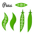 peas and unpeeled pea vector image vector image