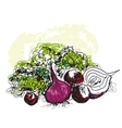 Vegetable still life vector image