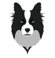 border collie avatar vector image vector image
