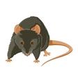 Evil rat vector image vector image