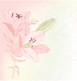 Floral background with lilies vector image