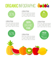 Organic infographic fresh fruits vector image
