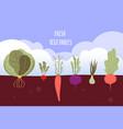 vegetable garden organic and healthy food veggies vector image vector image