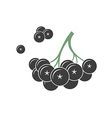 Black rowan vector image vector image
