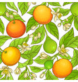 grapefruit branch pattern vector image