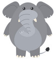 gray elephant on white background vector image