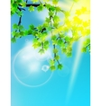 Sun beams and green leaves vector image