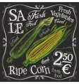 ripe corn logo design template fresh food vector image