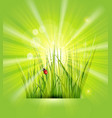 spring background with green grass sunshine