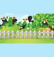 scene with many toucan birds in park vector image