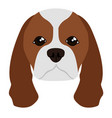 cavalier king charles spaniel avatar vector image vector image