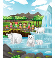 scene with polar bears and children at zoo vector image vector image