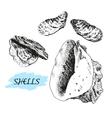 Seashells vector image vector image