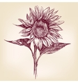 sunflower hand drawn llustration realistic sketch vector image
