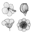 hand drawn lotus flowers vector image