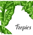 Background with banana leaves Image of decorative vector image vector image