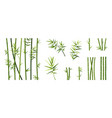 bamboo leaf and stick cartoon tropical trees vector image vector image