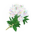 branch colorful rhododendron branch flowers vector image vector image