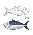hand drawn tuna fish black and white and color vector image vector image