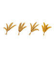realistic wheat ears and grains organic rye vector image