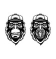 set gorilla in baseball cap on white vector image