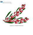 Tagimaucia Flower The National Flower of Fiji vector image