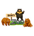 three bears in the zoo vector image vector image