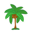 tropical palm tree with coconuts and green leaves vector image vector image