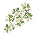 white blossom ornament vector image vector image