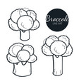 hand drawn set of broccoli retro sketches vector image