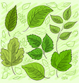 Set of green leaves hand-drawn for your design vector image vector image