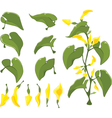Set of Green leaves vector image vector image