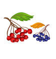 sketcn rowanberry and blue berry vector image vector image