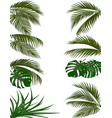 set green leaves of tropical palm trees monstera vector image vector image