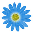 A blue flower vector image vector image