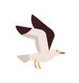 adorable polar bird flying with raising up wings vector image vector image