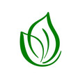 plant logo of green leaf of tea ecology nature vector image vector image